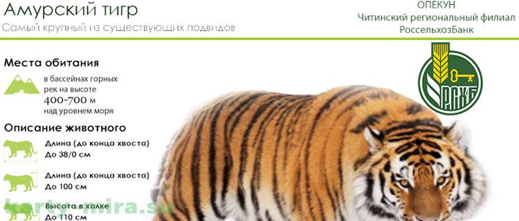россельхозбанк карта амурский тигр условия